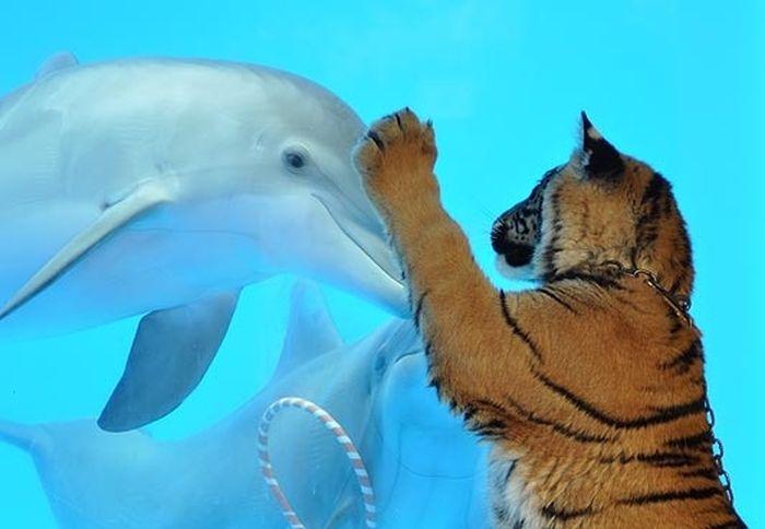 Подборка фотографий животных