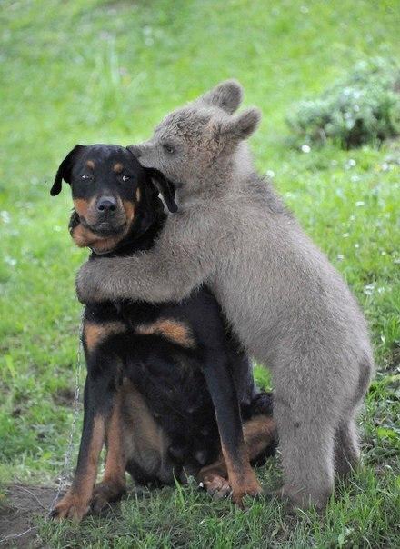 Подборка фото животных