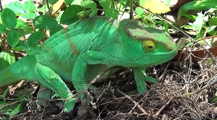 Мадагаскар 3D / Madagascar 3D (2013) BDRip