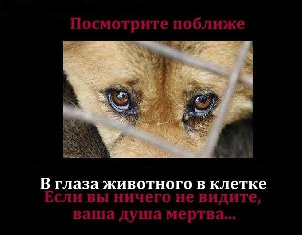 http://i6.imageban.ru/out/2013/09/27/7911f21bcab5e56409c8bcc2df651bc9.jpg