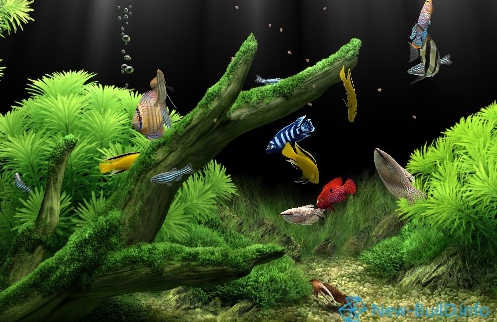 Dream aquarium screensaver 1.27 final  2017 ml rus