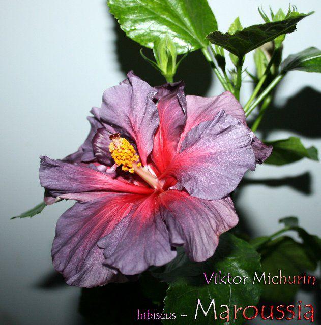 http://i6.imageban.ru/out/2013/12/11/9ea1c1d6b4b4d6b1979c74ae5555fa55.jpg
