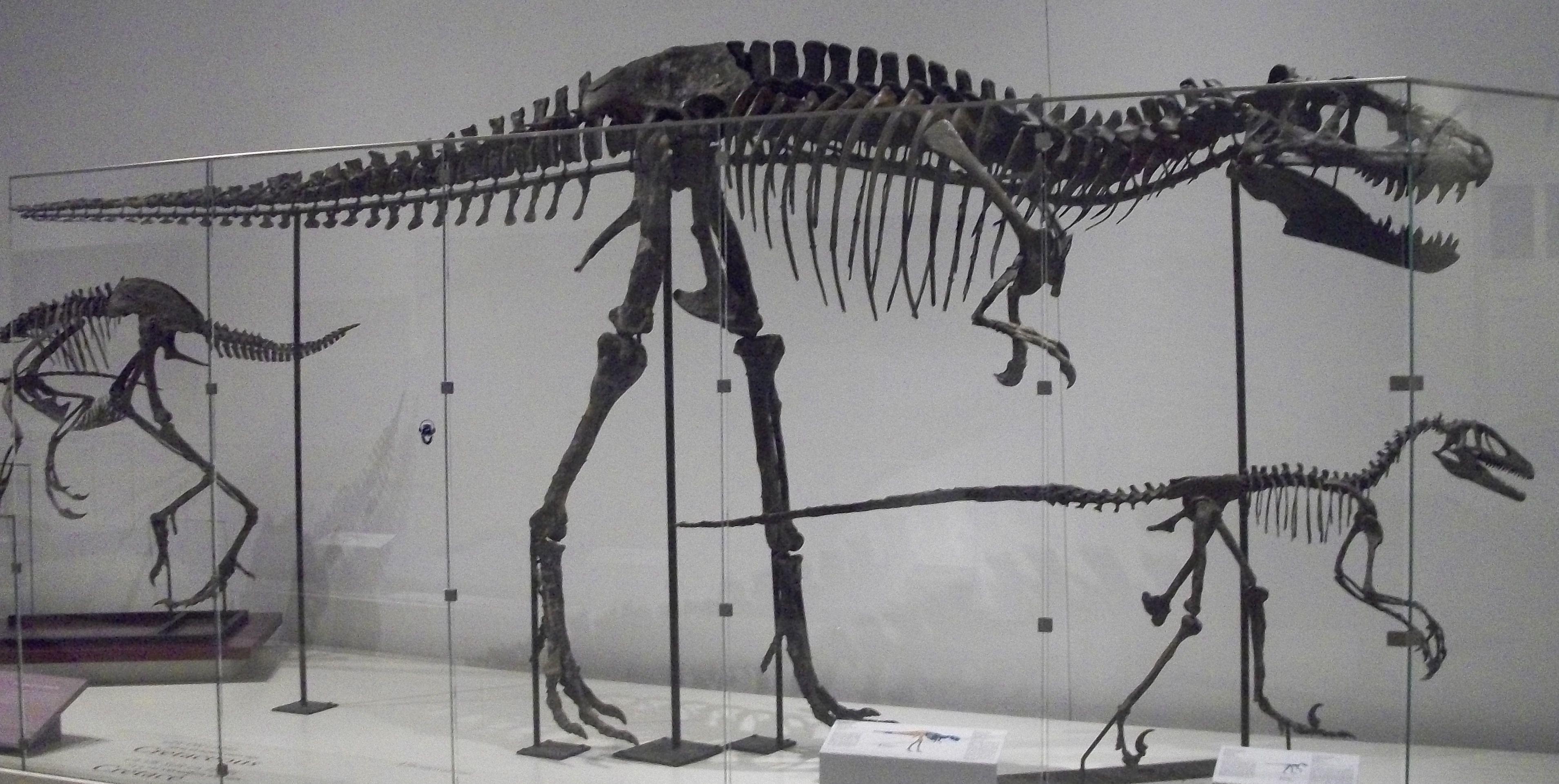 Albertosaurus_and_Deinonychus_at_the_Royal_Ontario_Musem.JPG
