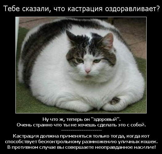 kastracia_2.jpg