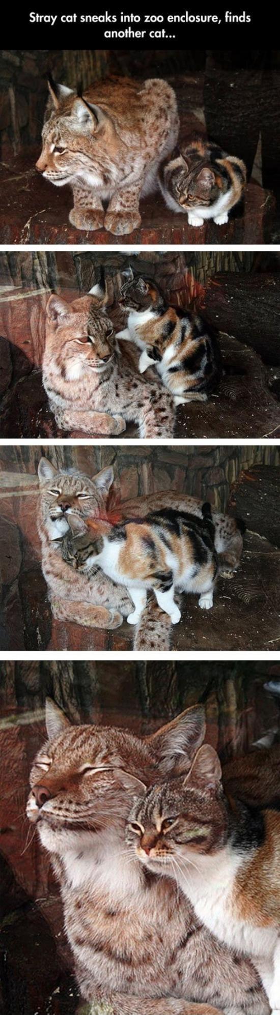 Бездомная кошка нашла себе друга в зоопарке 1