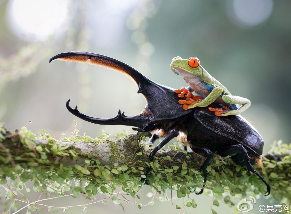 Верхом на жуке 1