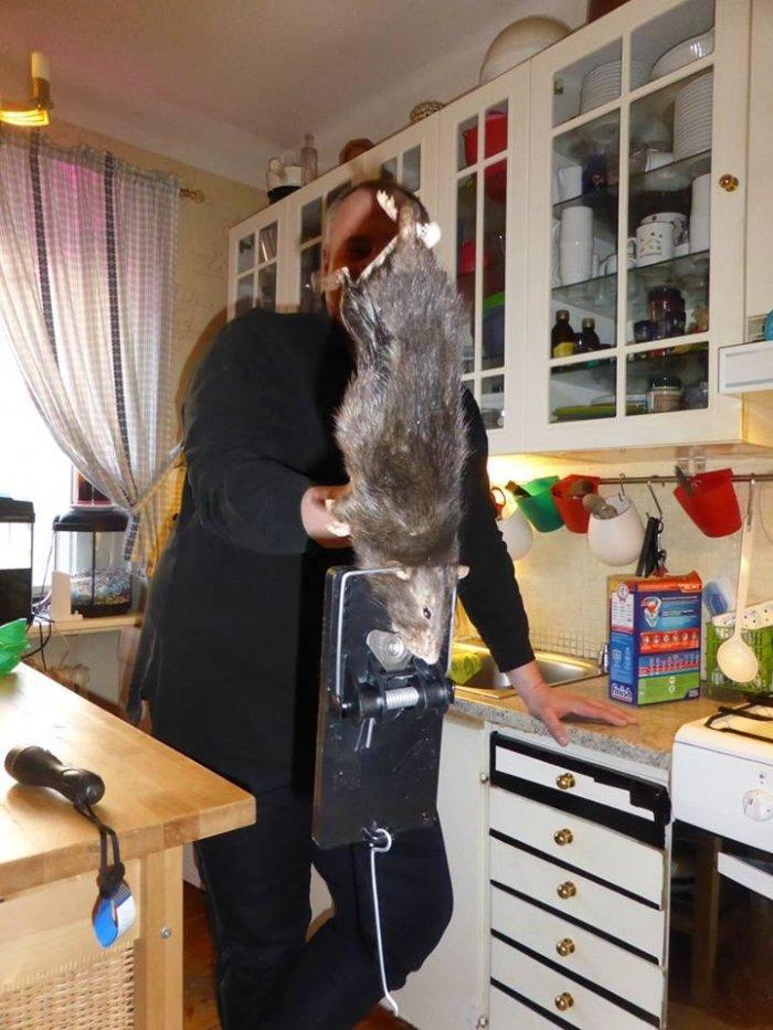 Поймал крысу 1