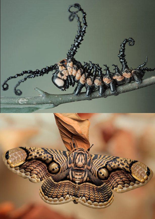 Удивительное насекомое 1