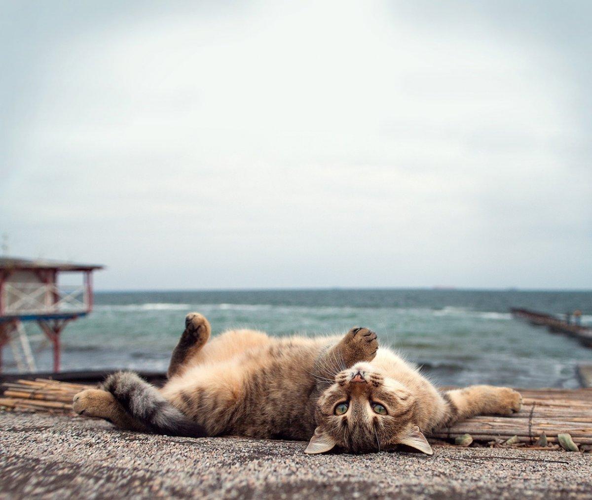Котейка на берегу 1