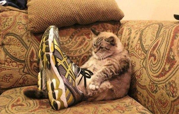 Кот в кроссовках. Теперь ты видел все 1