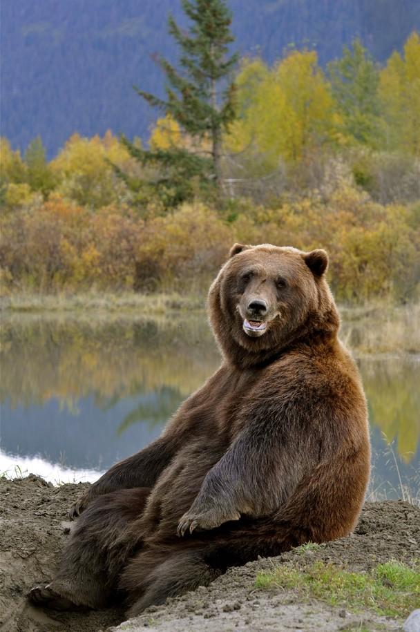 Доброе утро с медведем 1