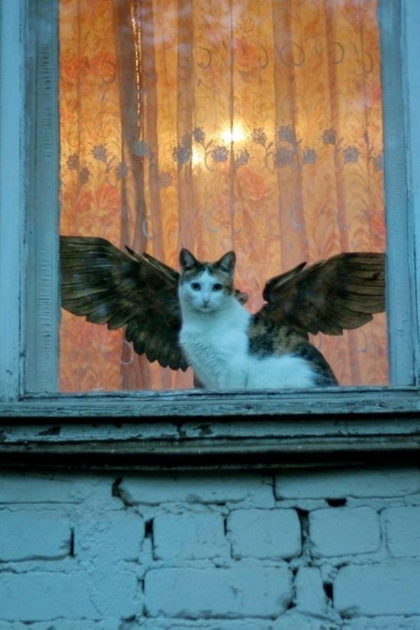 Крылатый кот 1
