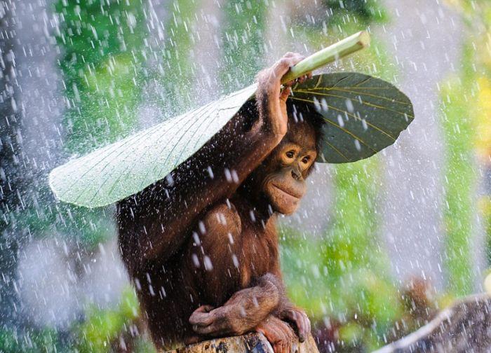 Под дождем 1