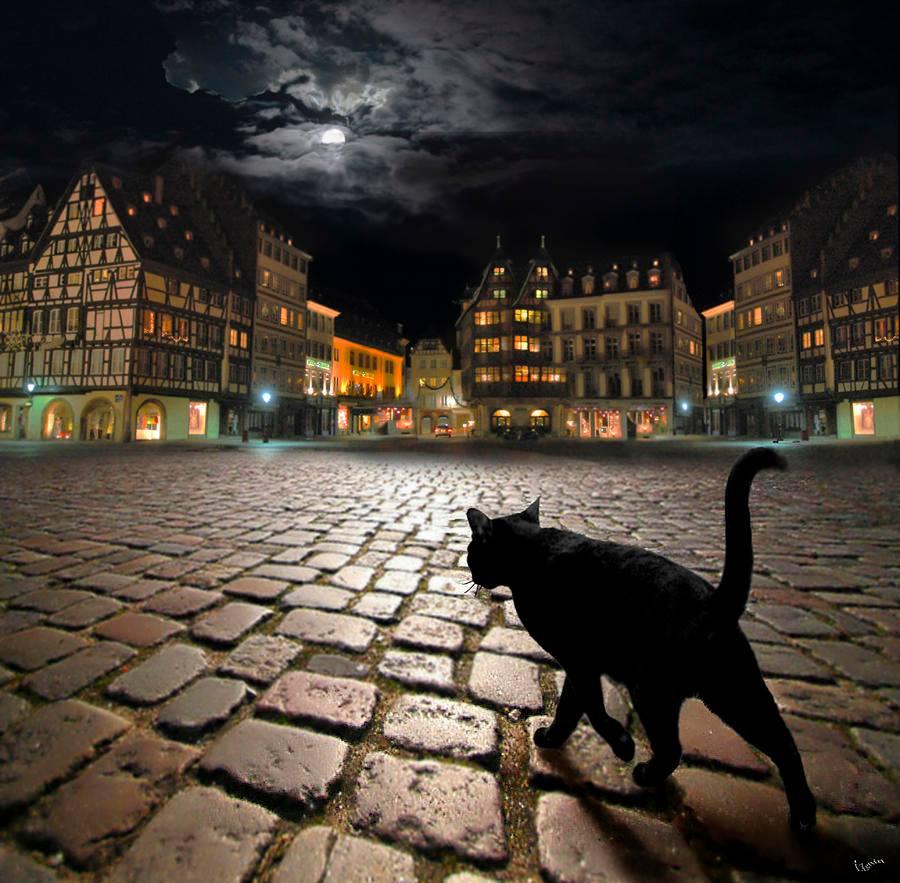 Черный кот в ночи 1