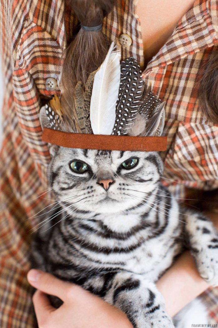 Коренной североамерикаснкий котейка 1