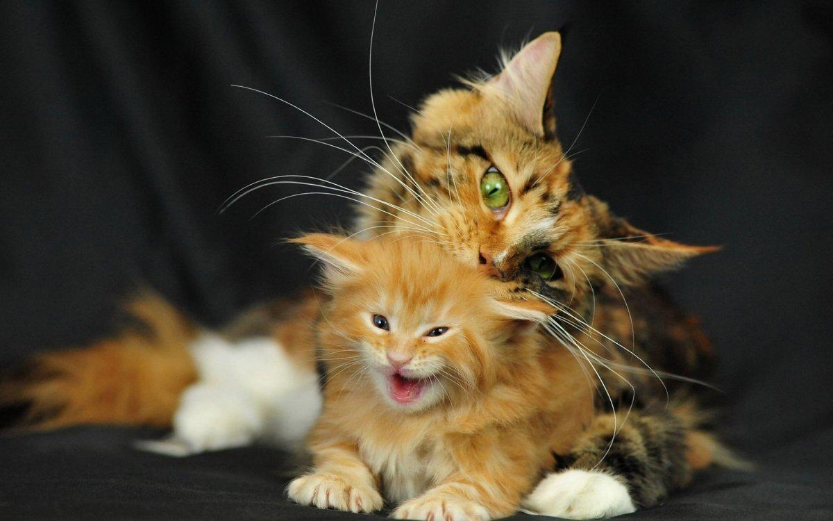 Кошка с котенком 1