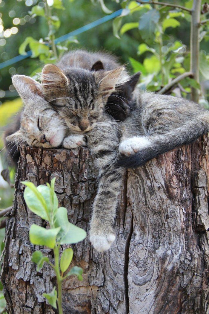 Спят усталые котейки 1