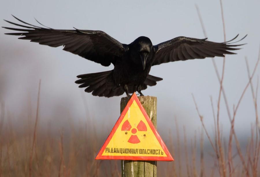 С приветом из Чернобыля