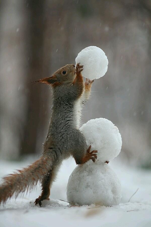 Белка лепит снеговика