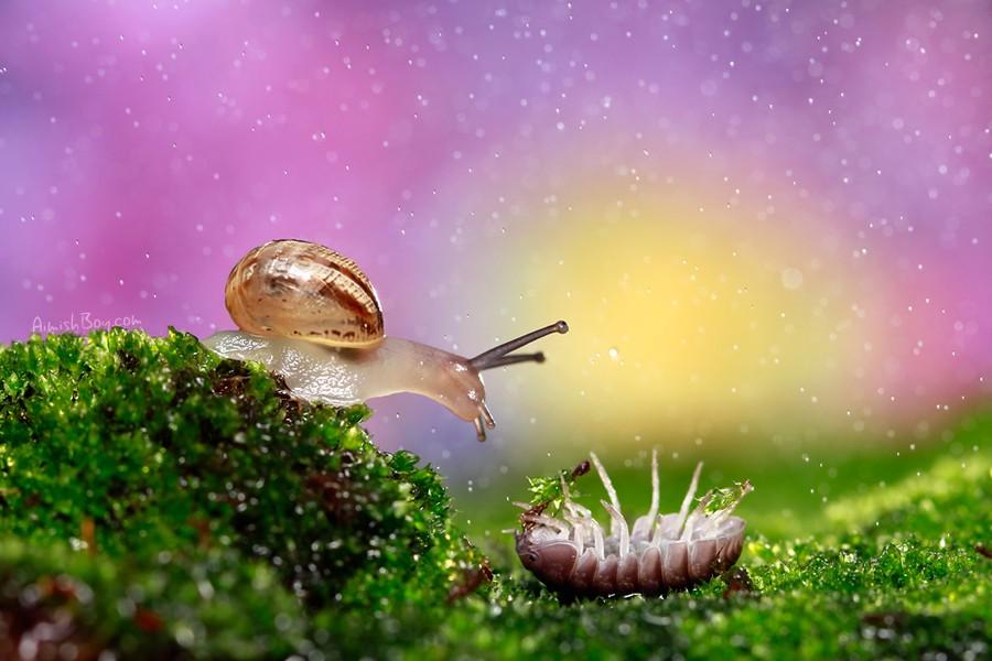 В мире маленьких животных