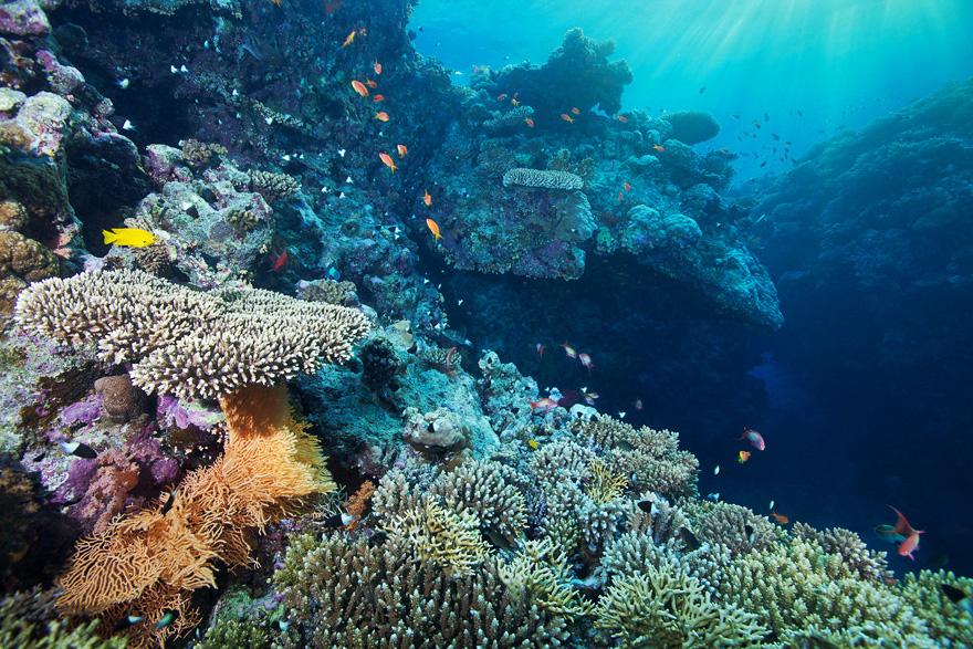 Картинки по запросу завораживающий  подводный мир Красного моря
