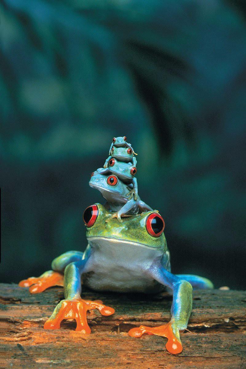 Лягушка с потомством
