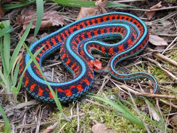 Яркая змейка