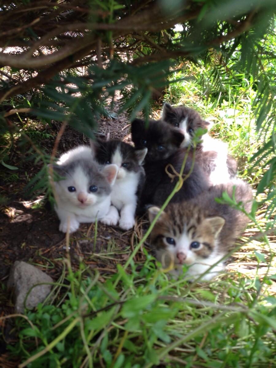 Котята под кустом