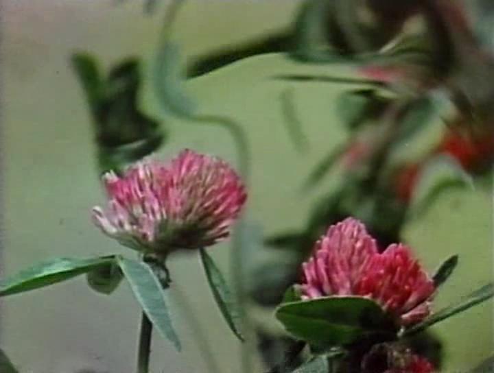 Песня весне 1975.avi_snapshot_09.46_[2015.05.26_00.58.52].png