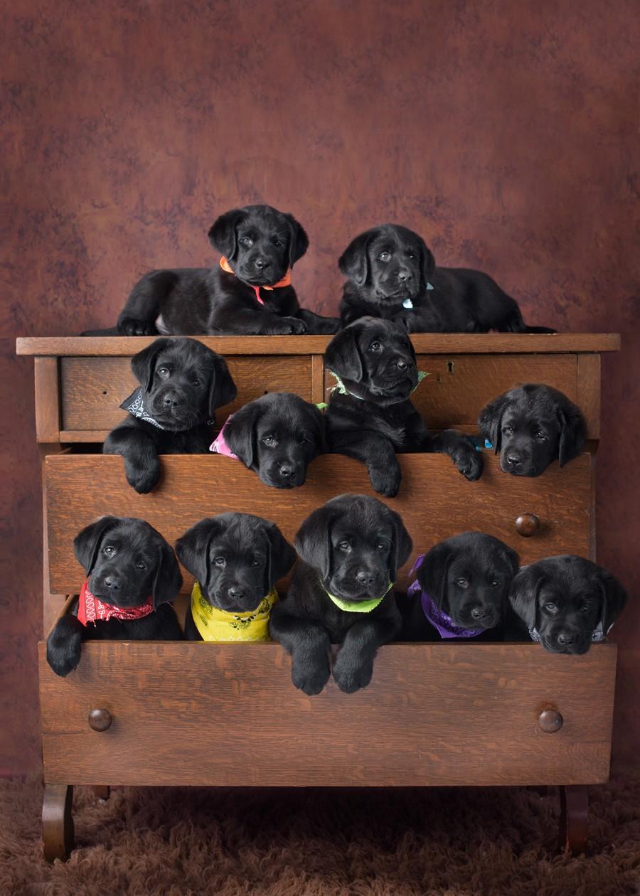 Ящик щенков