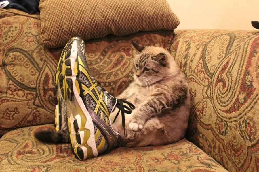 Котейка в кроссовках