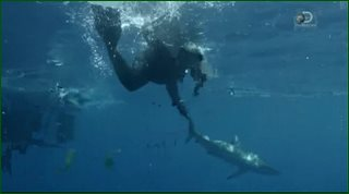 ������ ���� / Discovery. Shark Week [1-10 ����� �� 10] (2015) HDTVRip �� GeneralFilm