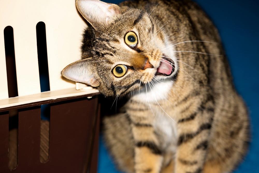 Обои для рабочего стола - И снова о котах [1920x1080 - 5424x3712] [101шт.] (2015) JPG