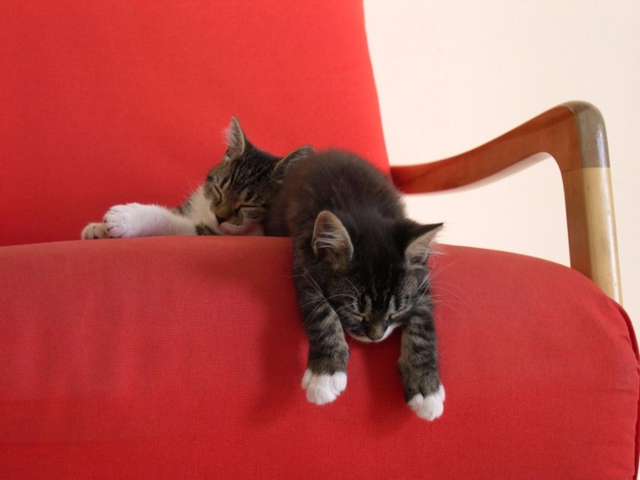 Спящие котейки
