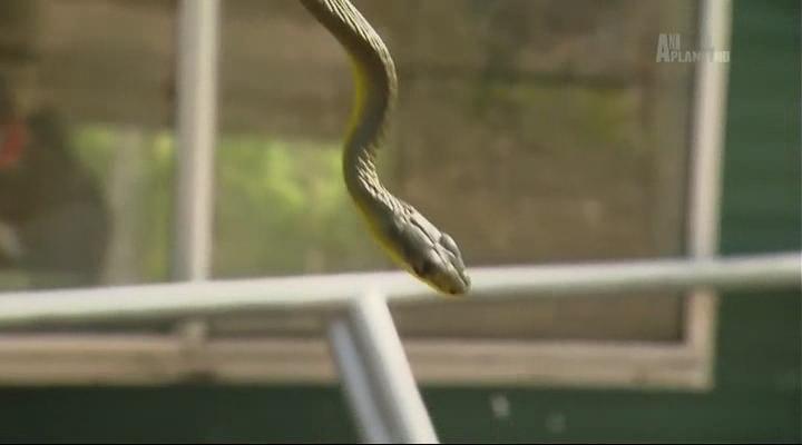 Animal Planet. Охотница на змей / Snake Sheila (Серии 01-10 из 10) (2015) HDTVRip