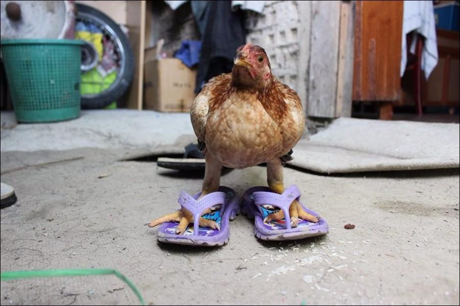 Просто курица в тапках, листай дальше