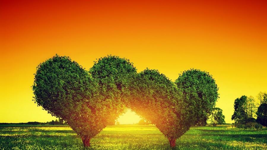 Деревья в виде сердец