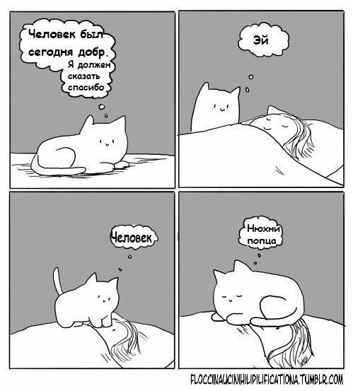 Спасибо от котейки