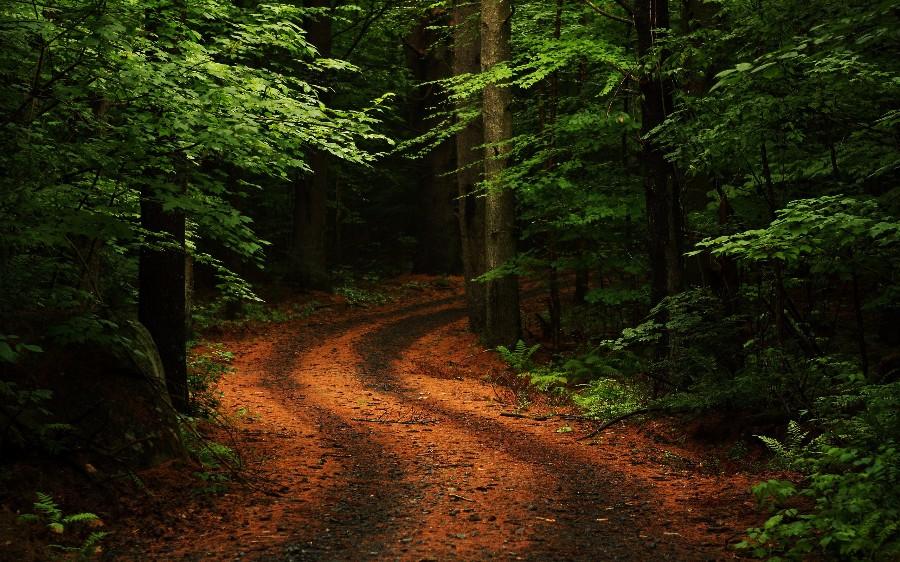 Просека в лесу