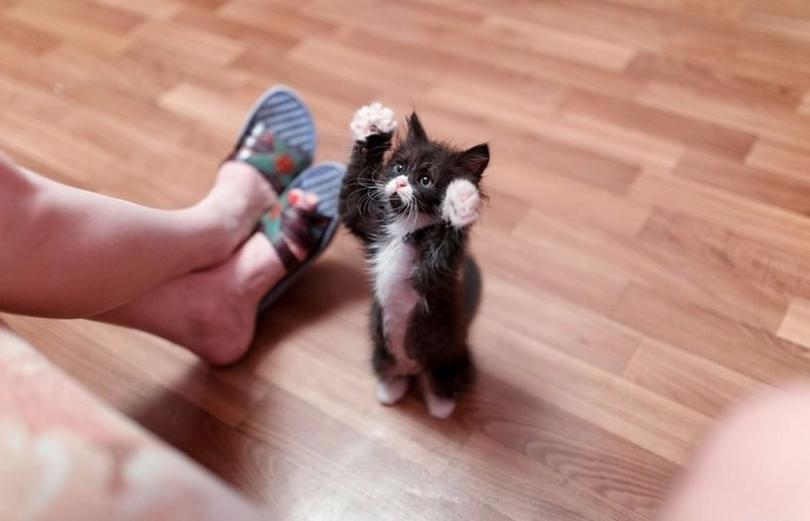 Игривый котенок 1