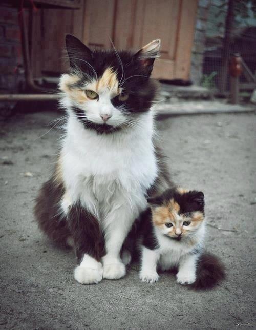 Мама с дочкой 1