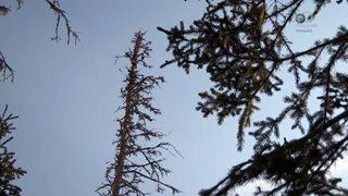 Discovery. Аляска: последний рубеж / Alaska: The Last Frontier [S05] (2015) HDTVRip 720р от GeneralFilm | P1