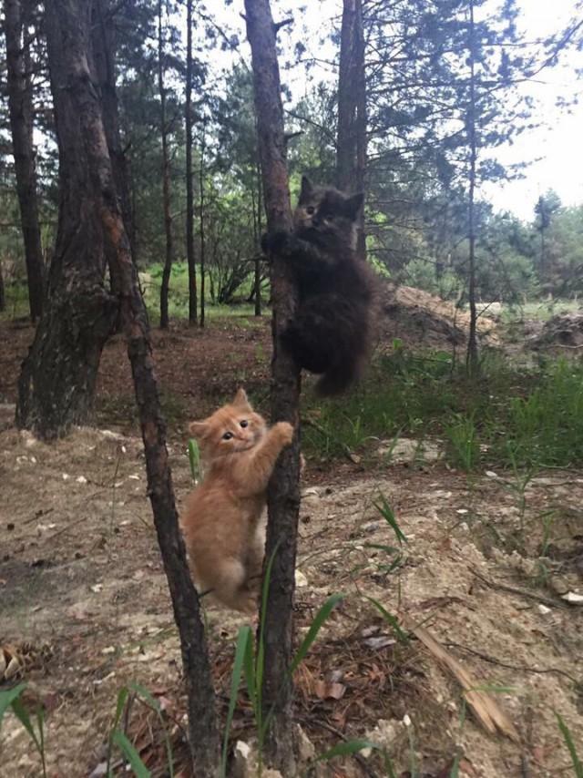 Мимимишки на дереве 1