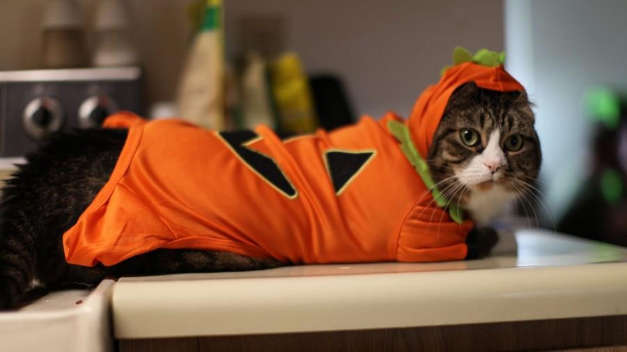 Котейка в костюмчике