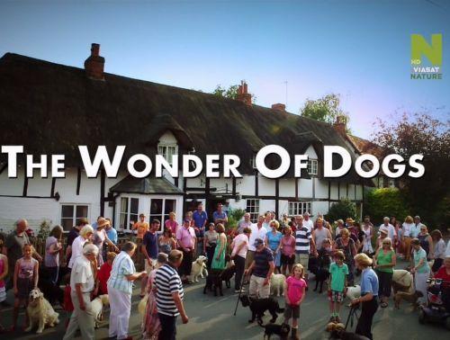 ������ ���� �������� / The Wonder of Dogs [01-03 �� 03] (2013) HDTVRip 720p | P2