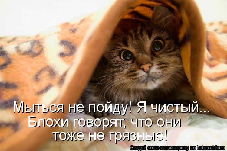 http://i6.imageban.ru/out/2016/07/09/0bf94c2fcb3c34cf1399613c172bdcdf.jpg