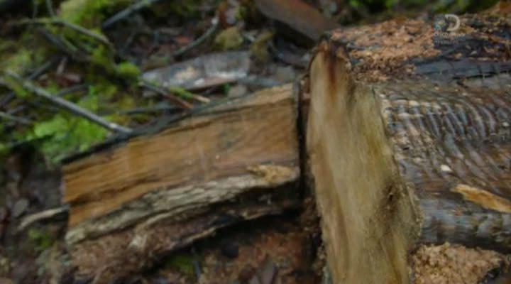 Лесной патруль  (1 сезон 1-6 серии из 6) (2016) HDTVRip