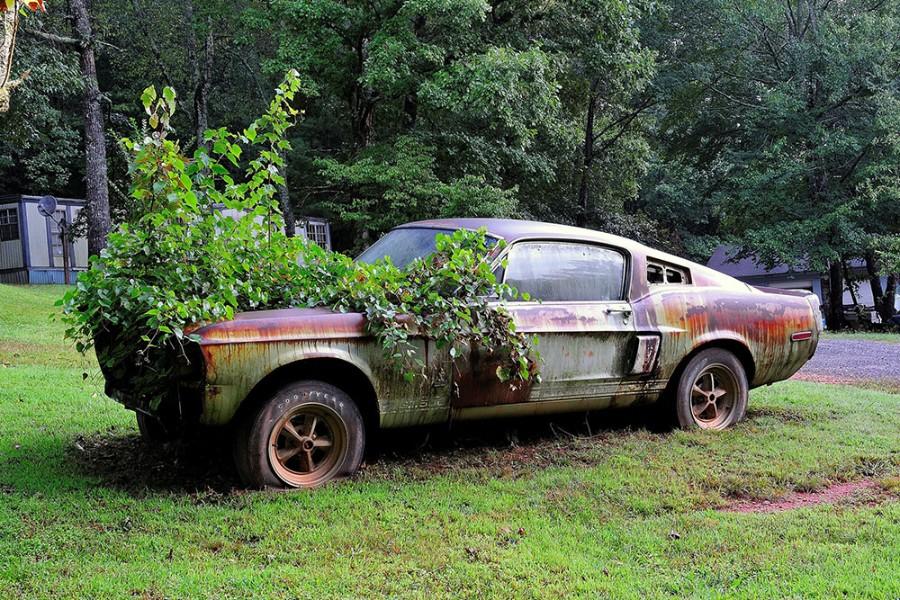 Проросшее авто