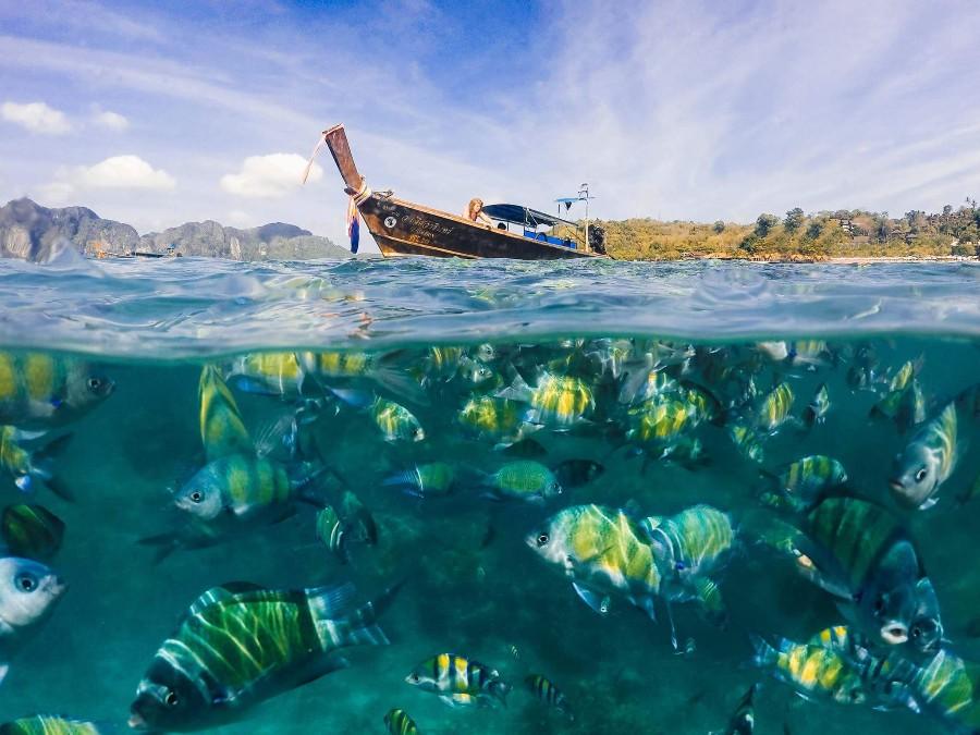 Яркие рыбки в океане