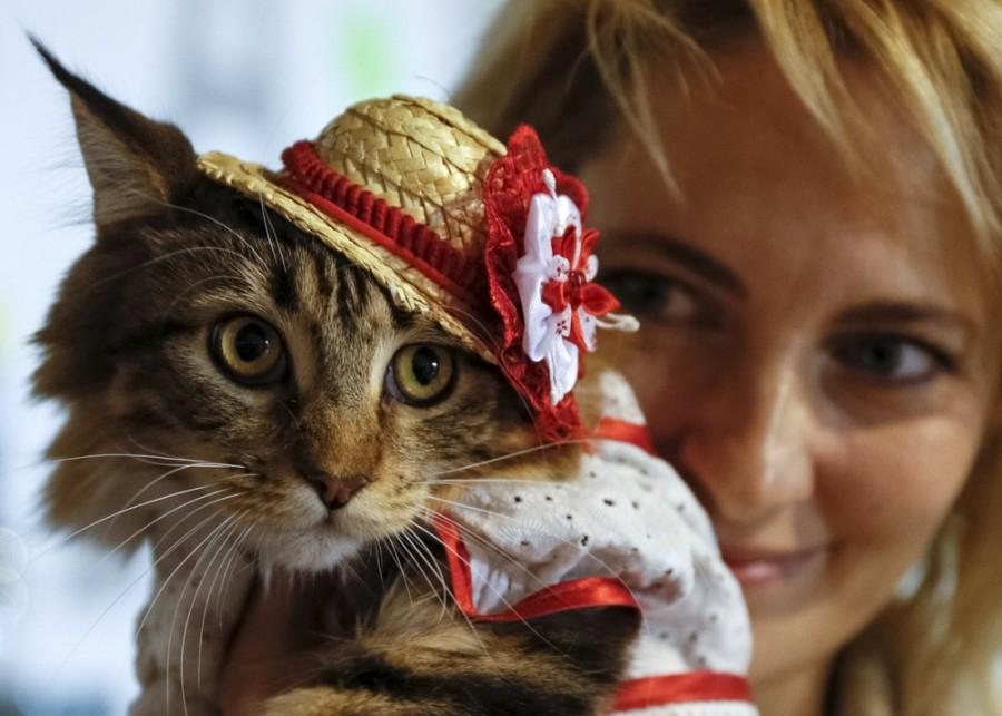 Котейка в шляпке